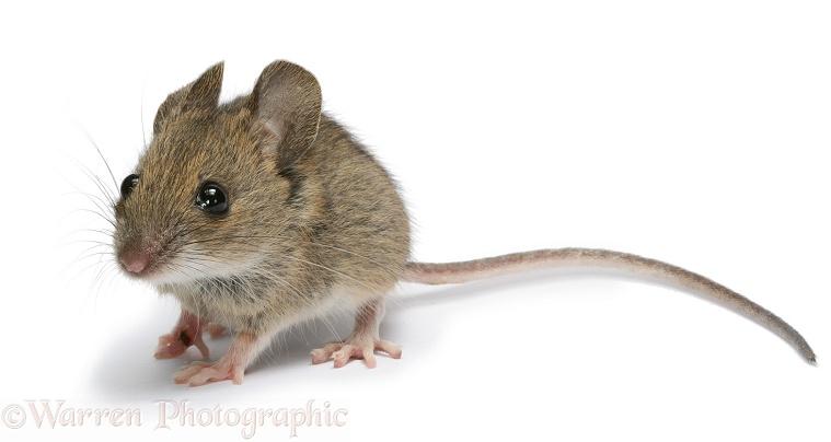 Het muis incident - Readalong